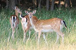 Dept. Of Agriculture Gives Tips About Deer With CWD