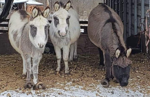 Neglected Animals Rescued From Harmony Home